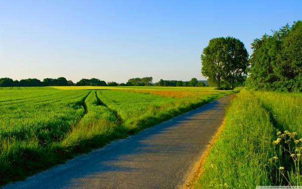 summer_landscape_nature_5-wallpaper-1440x900